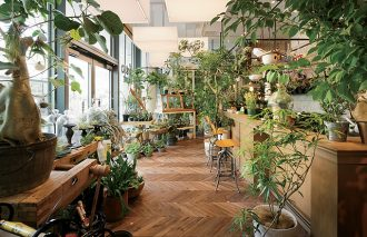 プロに訊く! 植物の基本的な種類と育て方 グリーン入門 ~第4回~